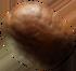 bean-2